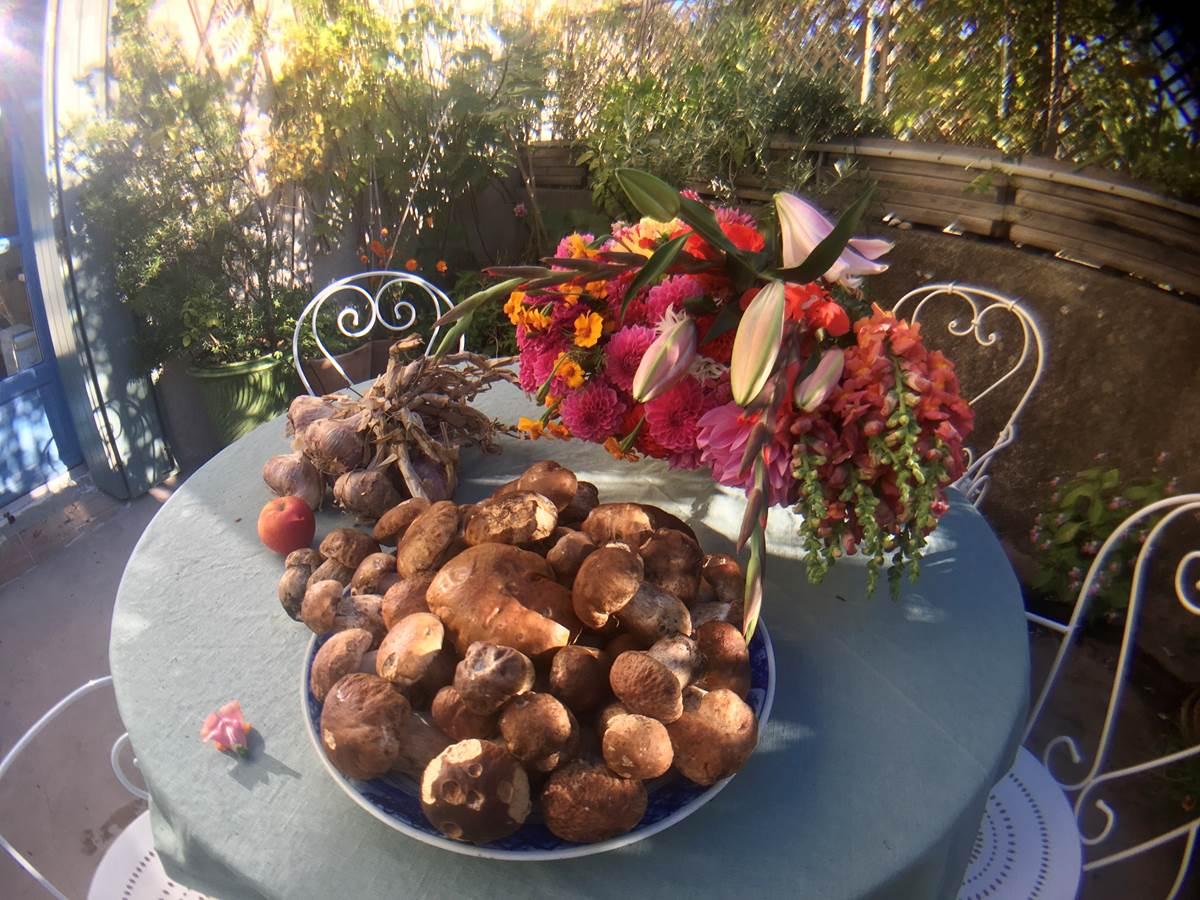 automne fleurs et cèpes