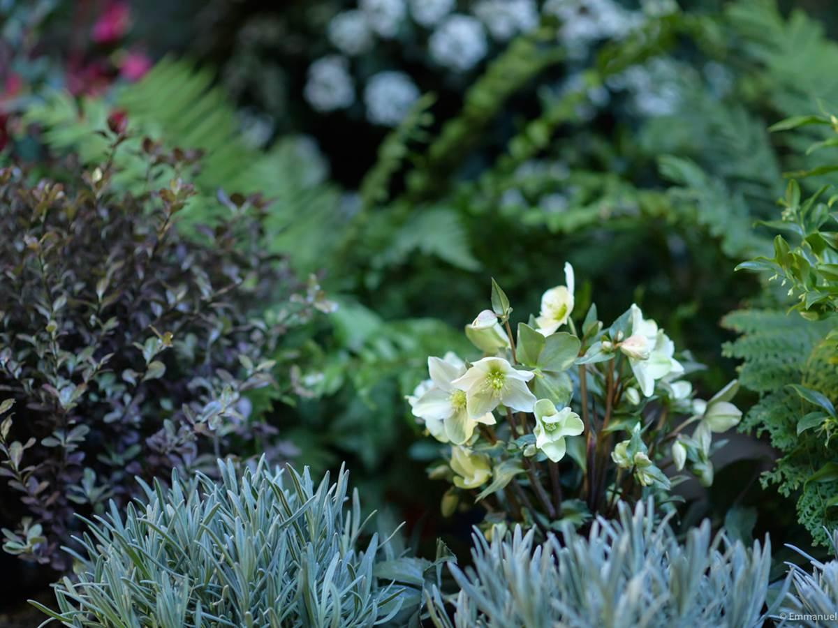 Jardin du gîte bien être Le Jardin intérieur à Saint Congard - Bretagne