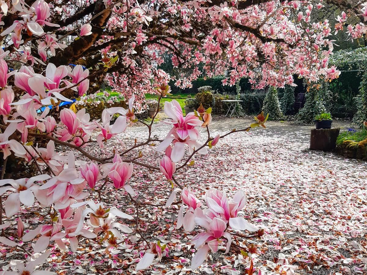 mars 2021 magnolia beauté, ce que nous vous ferons découvrir