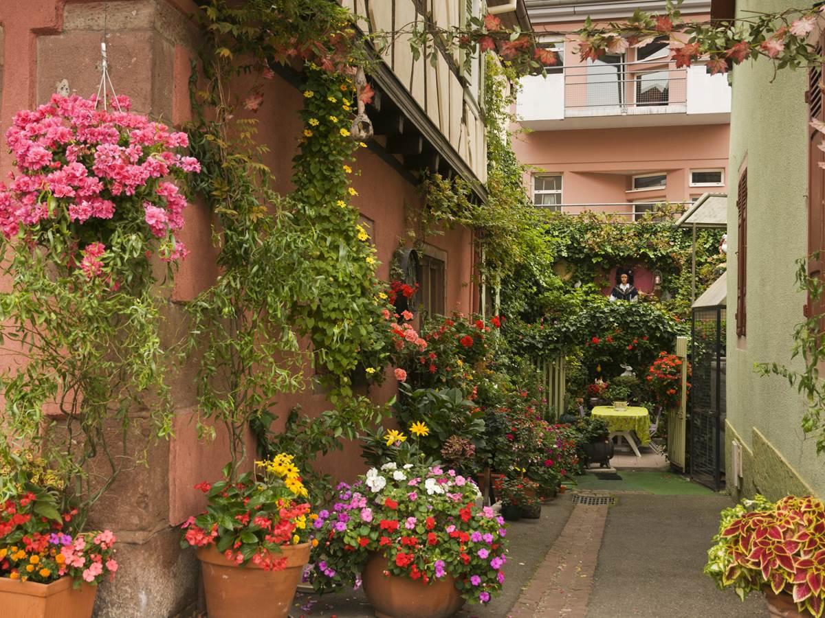A Ribeauvillé, Les allées ressemblent à des jardins et chaque maison choisit sa couleur