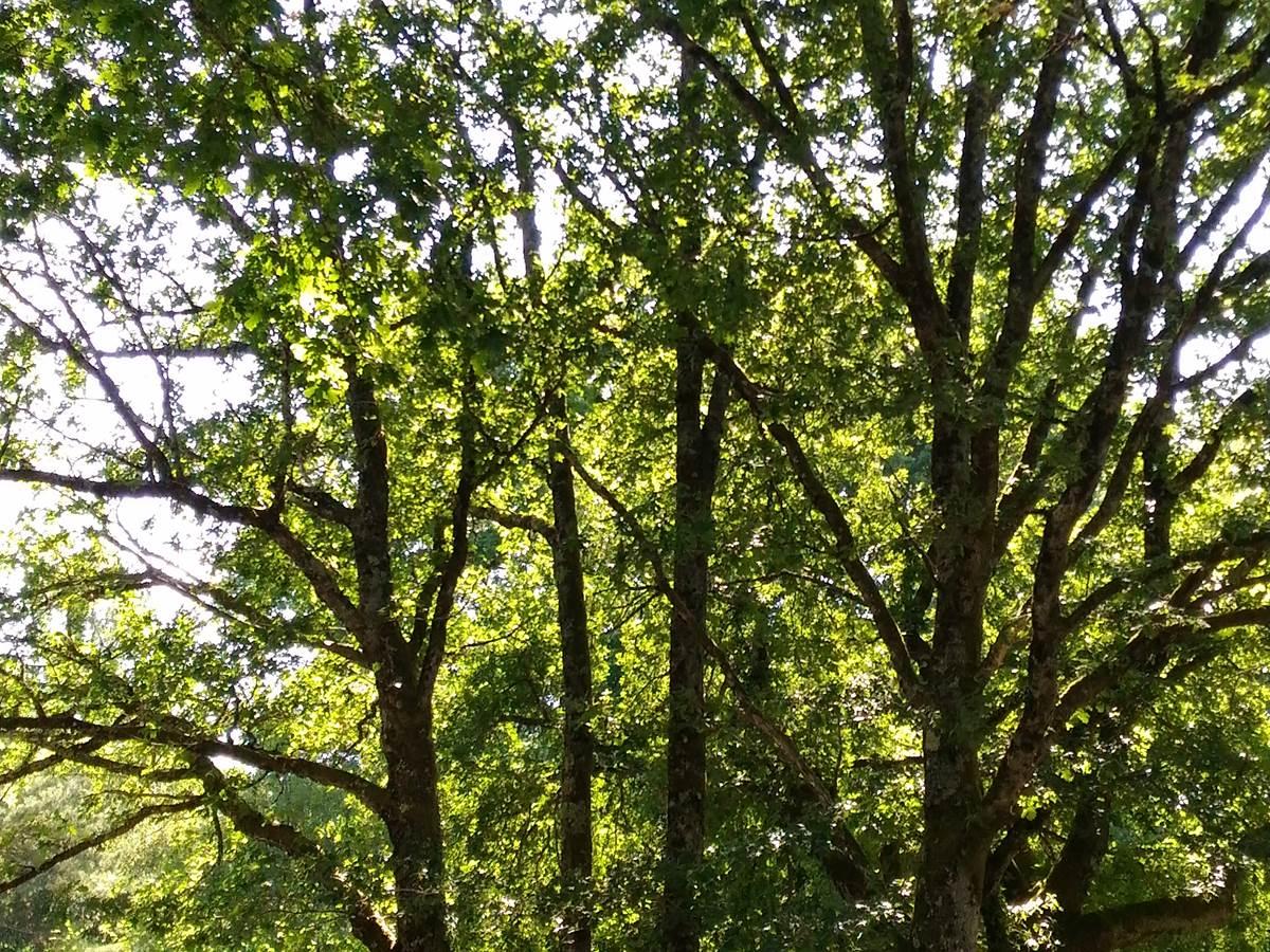 eriba onder bomen