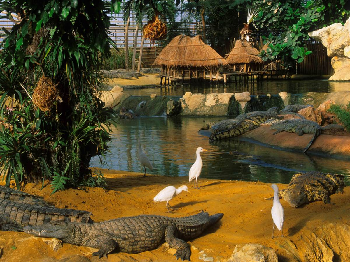 Ile__crocodile___oiseaux