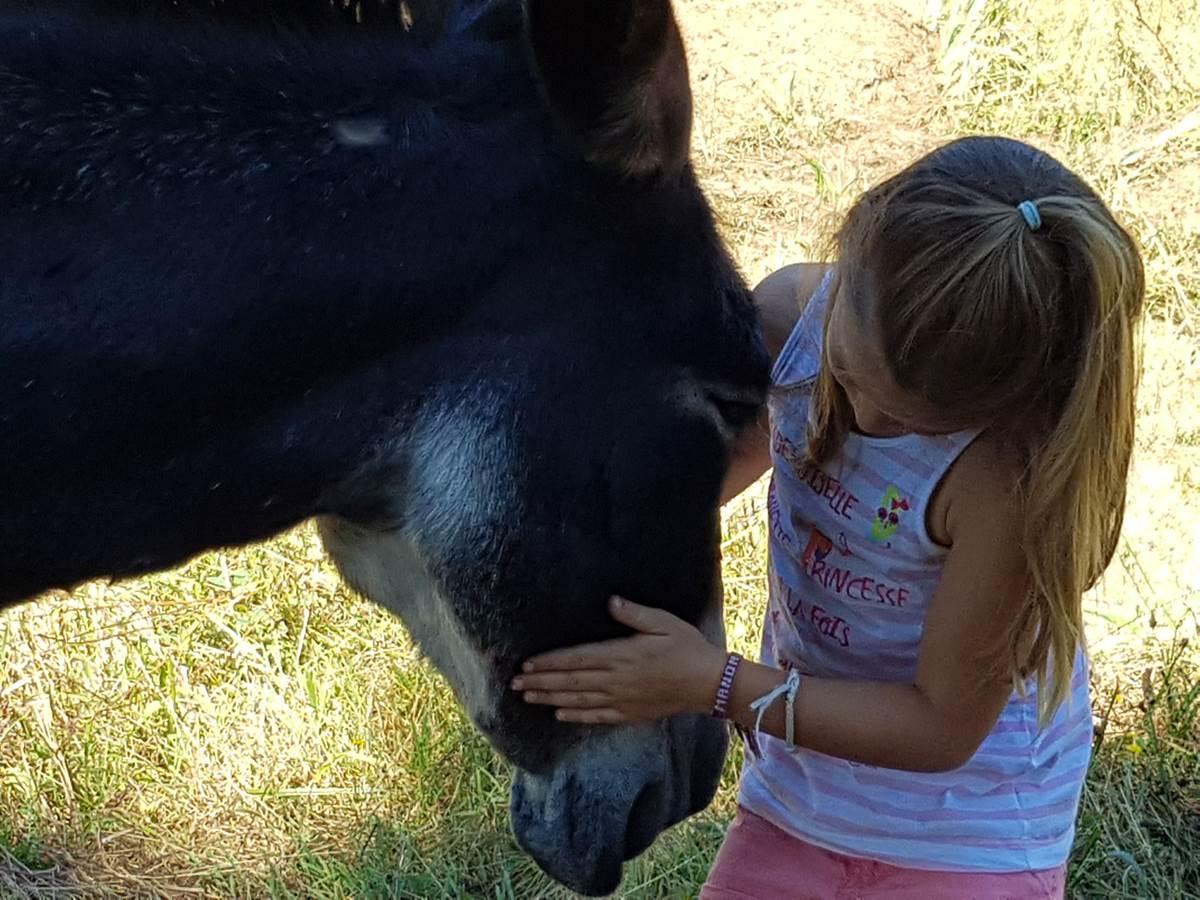 Rando avec un âne, étape à la Maison du Masjoubert
