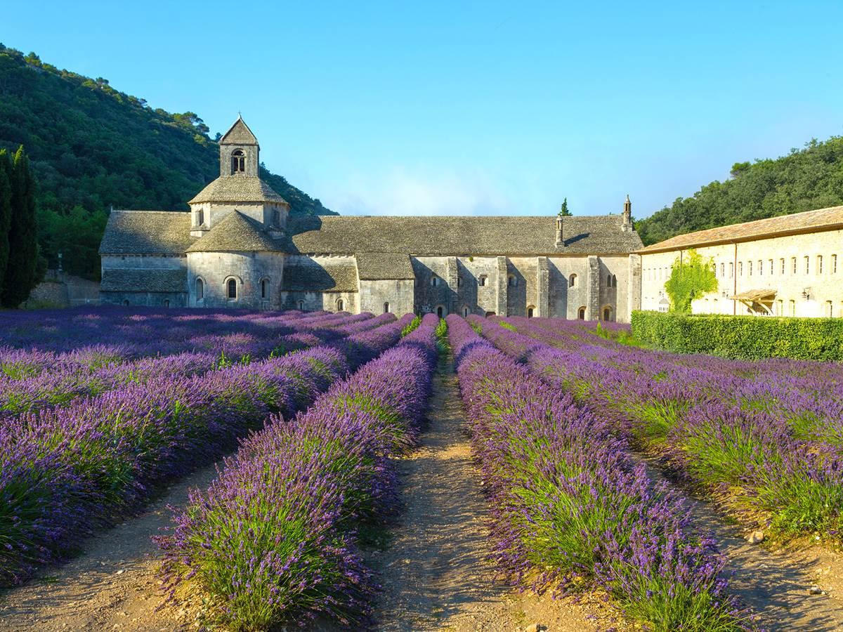 Abbaye de Senanque et lavande