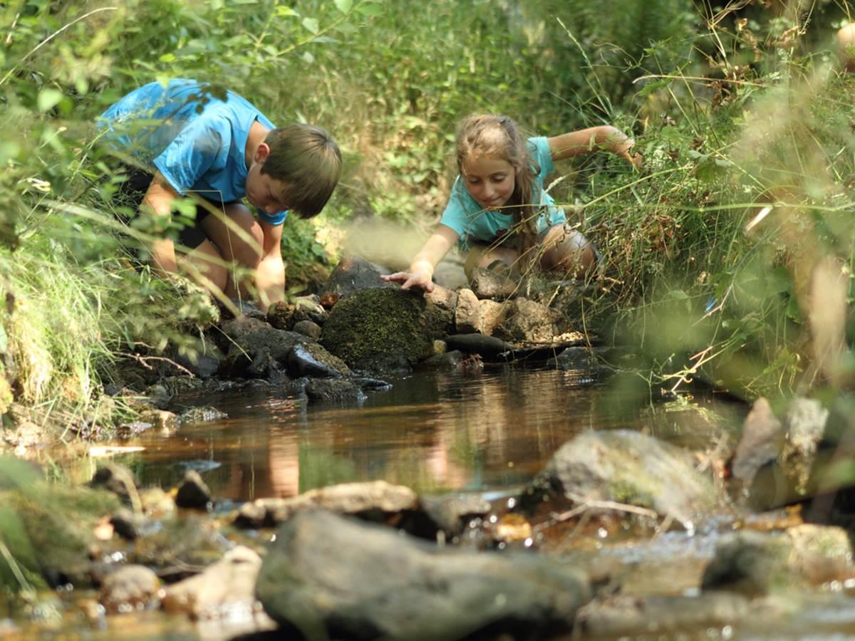Patoge dans les ruisseaux (photo Malika Turin)