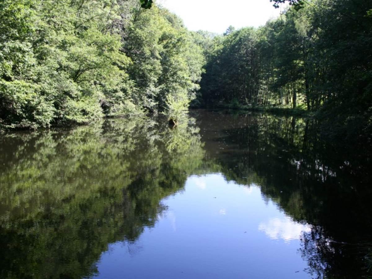 L'étang de pêche La-chapelle-aux-bois (de la propriété)
