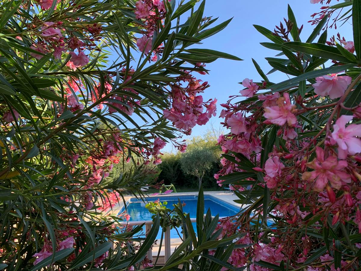 Mas Saint-Ange, chambres d'hôtes et gîtes en Camargue, piscine, parking, wifi