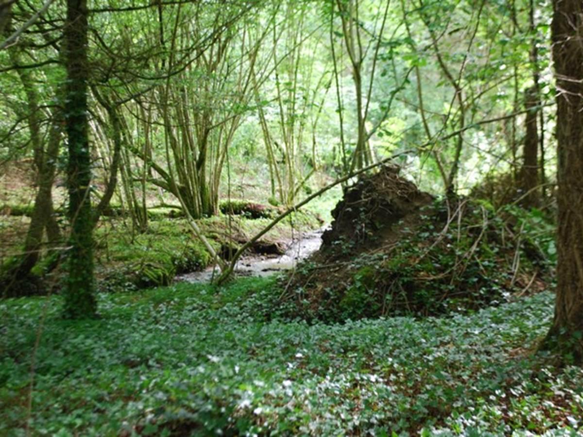 le ruisseau des fantaisies Vervialle 87120 Augne