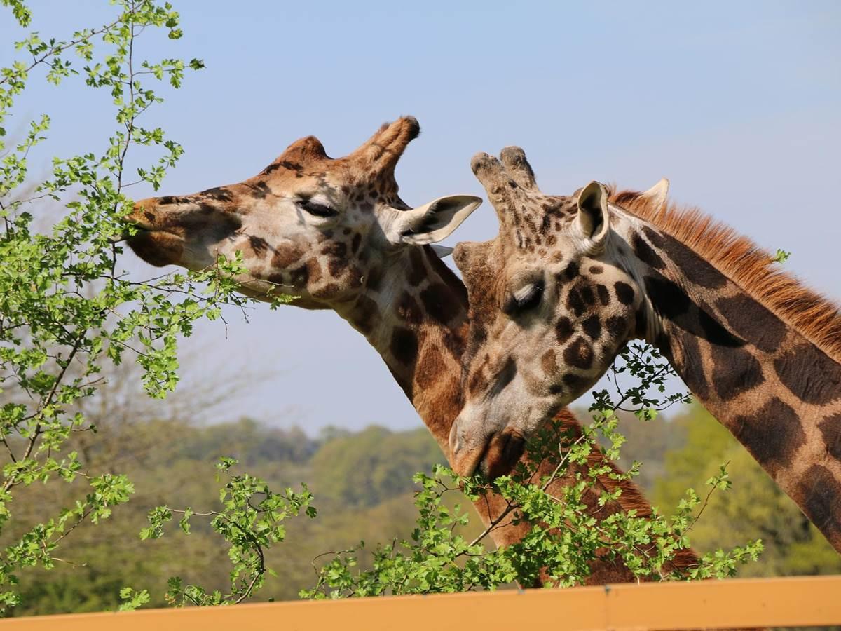 Parc zoo du Reynou ©hauteviennetourisme