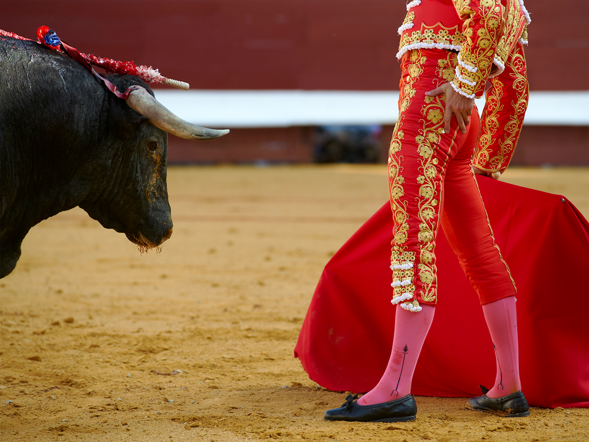 Feria de Dax: corrida et spectacles taurins