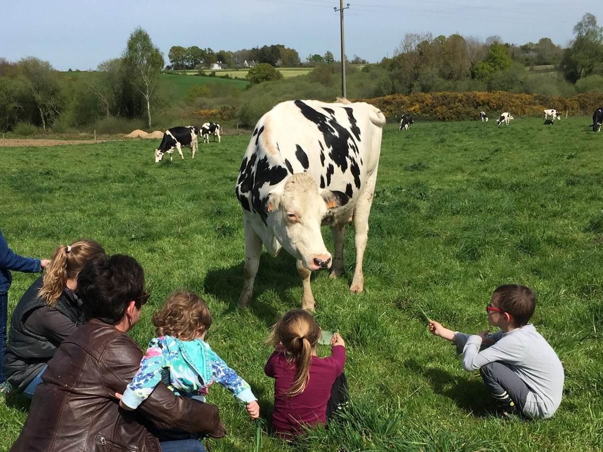 À la rencontre des vaches au champ