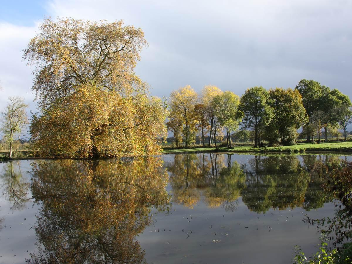 ETE INDIEN  sur l'étang  avec son platane de 1790