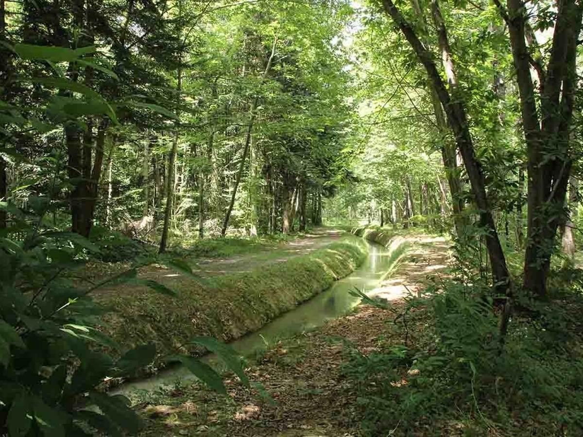 Cardeilhac, forêt, ©OTI Coeur & Coteaux Comminges