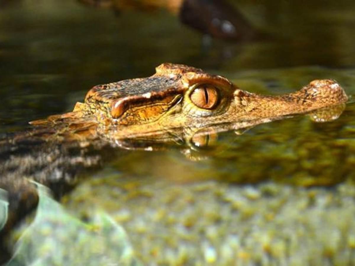 Aquarium du Limousin  20 min à pied. www.aquariumdulimousin.com