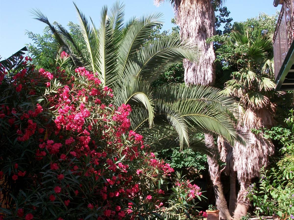 Palmier trônant dans le jardin intérieur