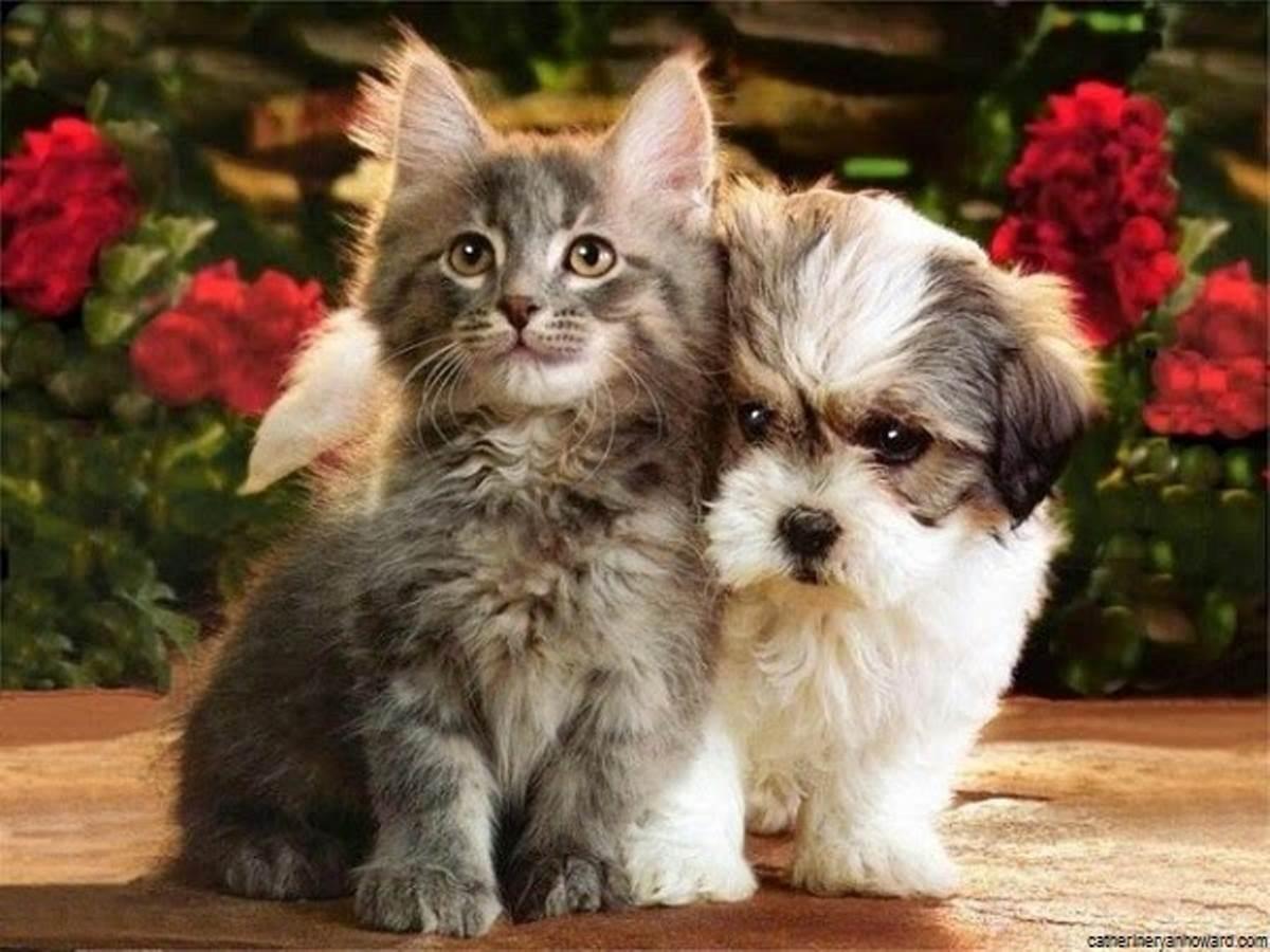 photo-de-chien-et-chat-84