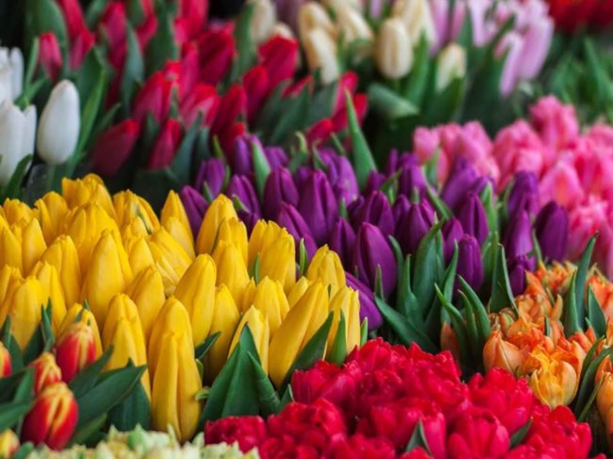 couleurs chatoyantes dans les halles du marché de Jonzac