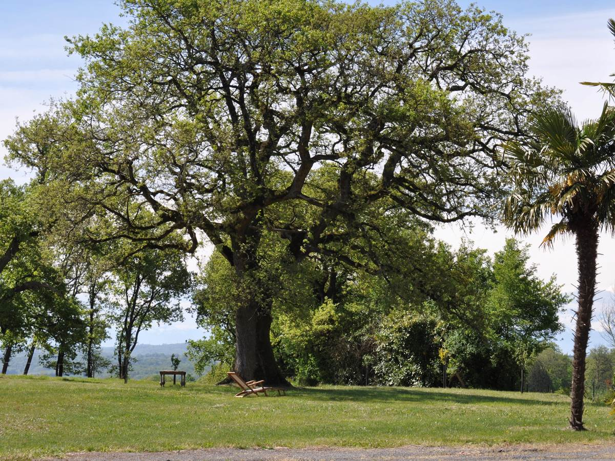 vue du jardin le grand chêne