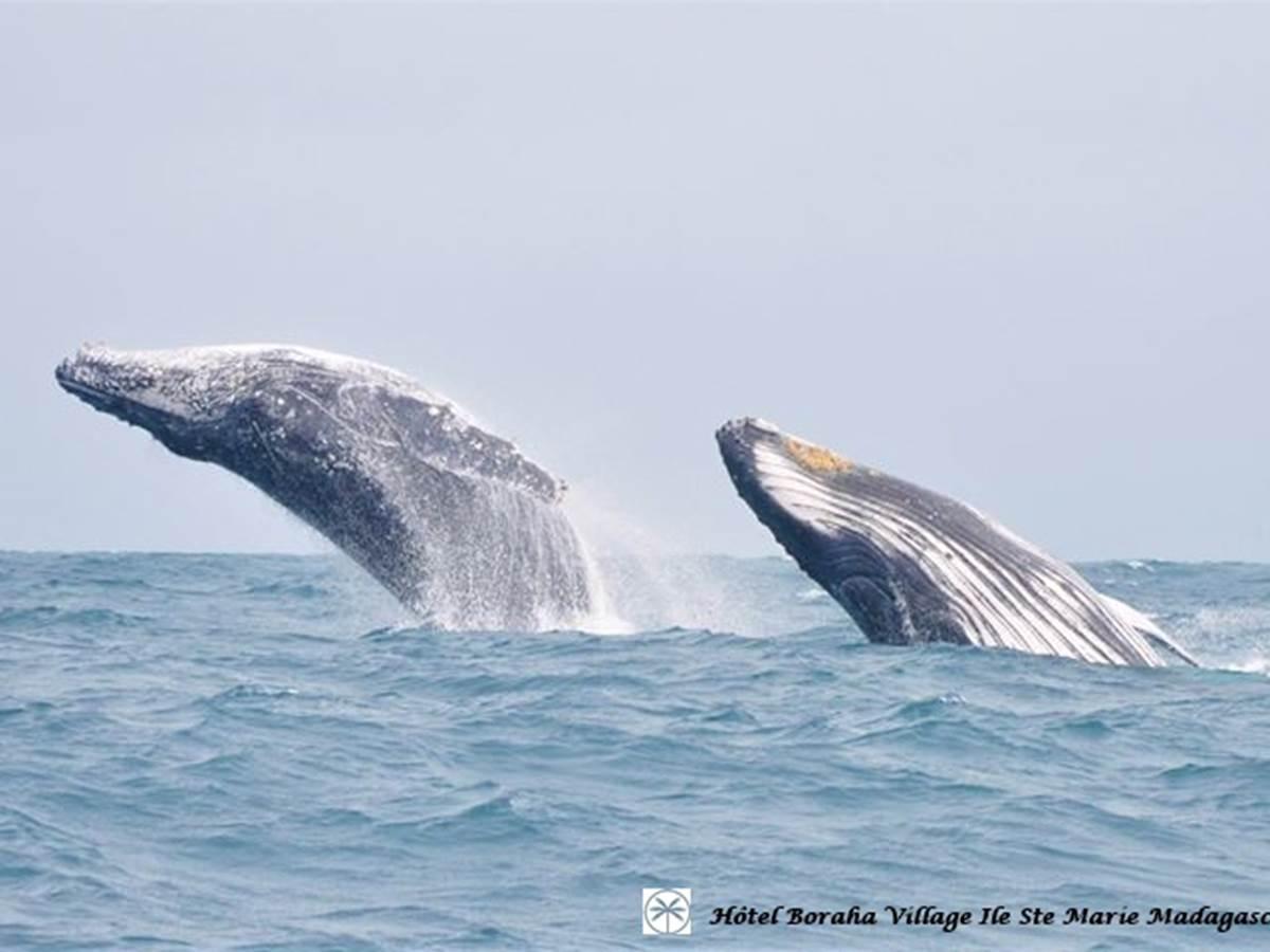 Baleine Boraha Village Ile Ste Marie Madagascar 36