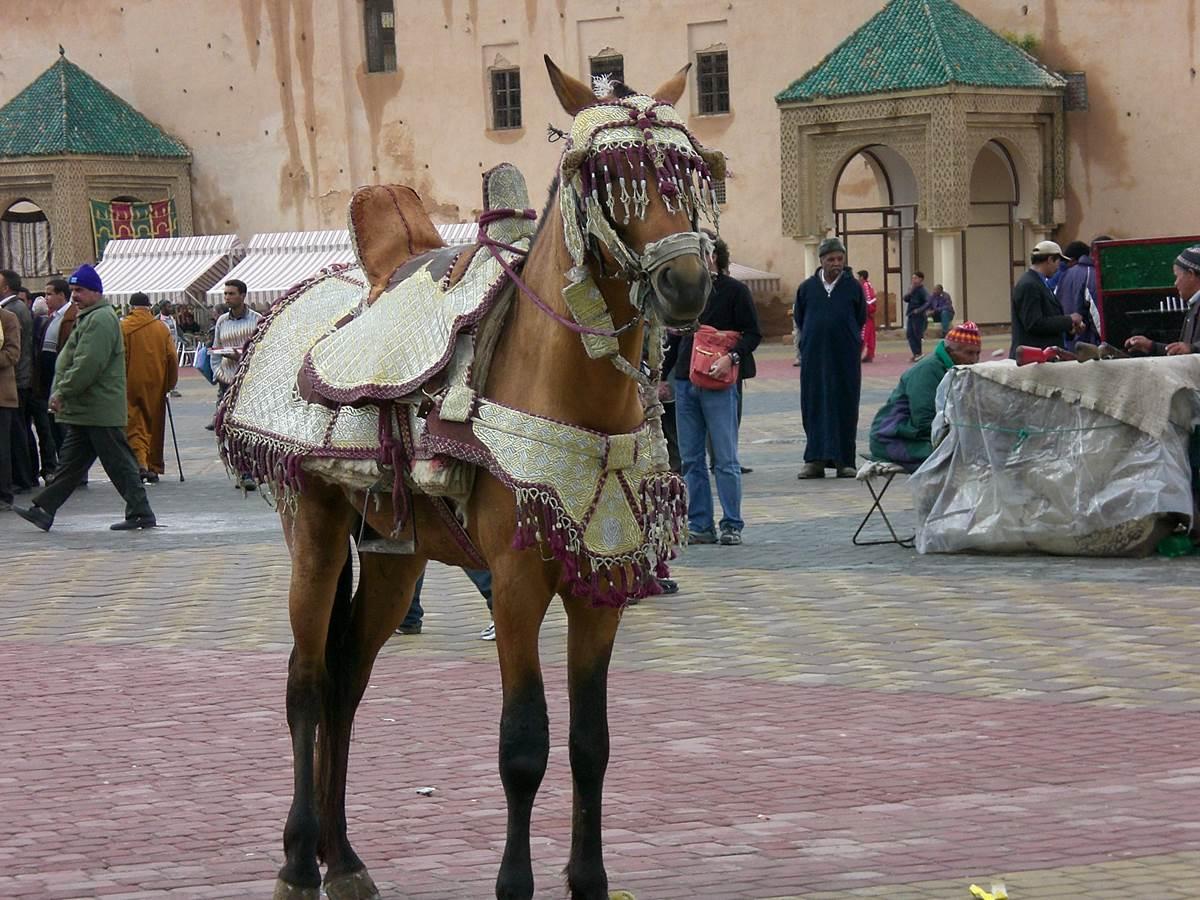 La merveilleuse place El Hedim à Meknès si animée !