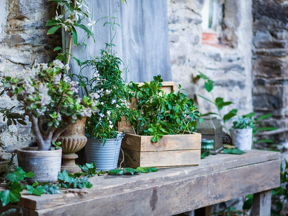 jardin interieur  gite bien etre saint congard bretagne, côté jardin 4