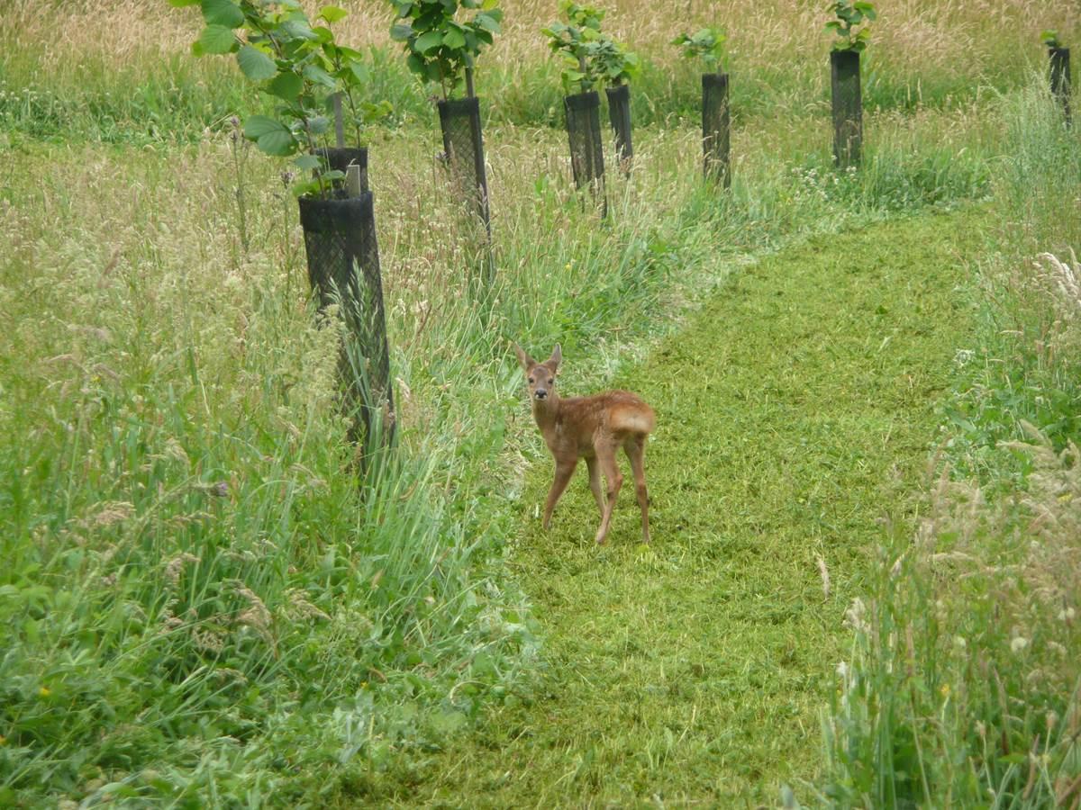 Surprise dans les hautes herbes