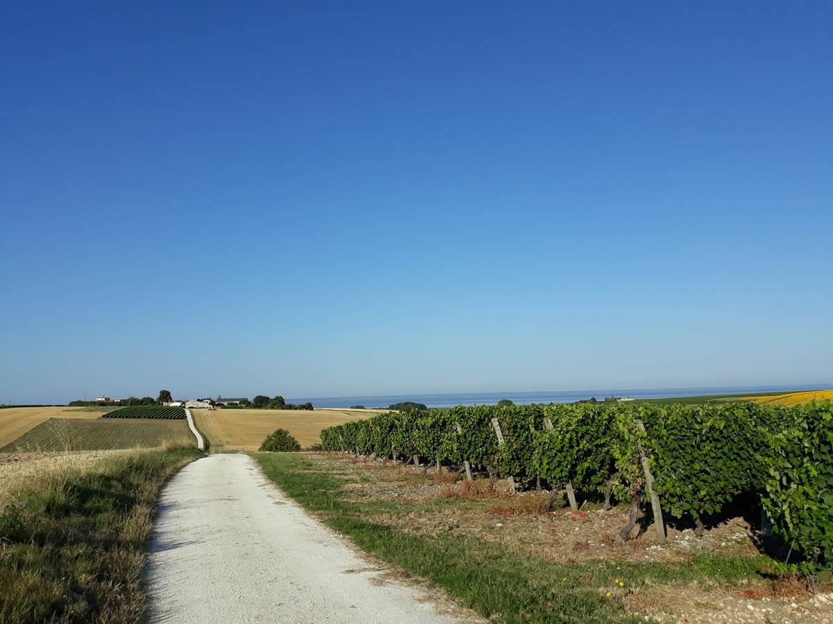 vignobles plongeant dans l'Estuaire de la Gironde