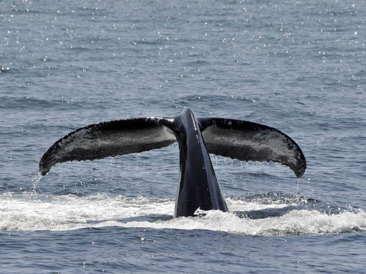 Sortie baleine