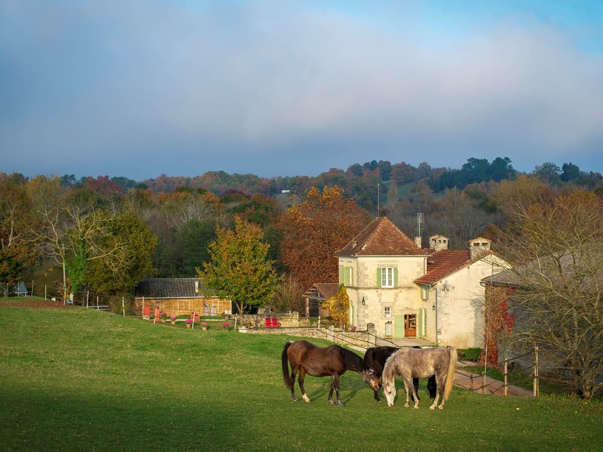 Les chevaux tout autour (c) M Dartenset