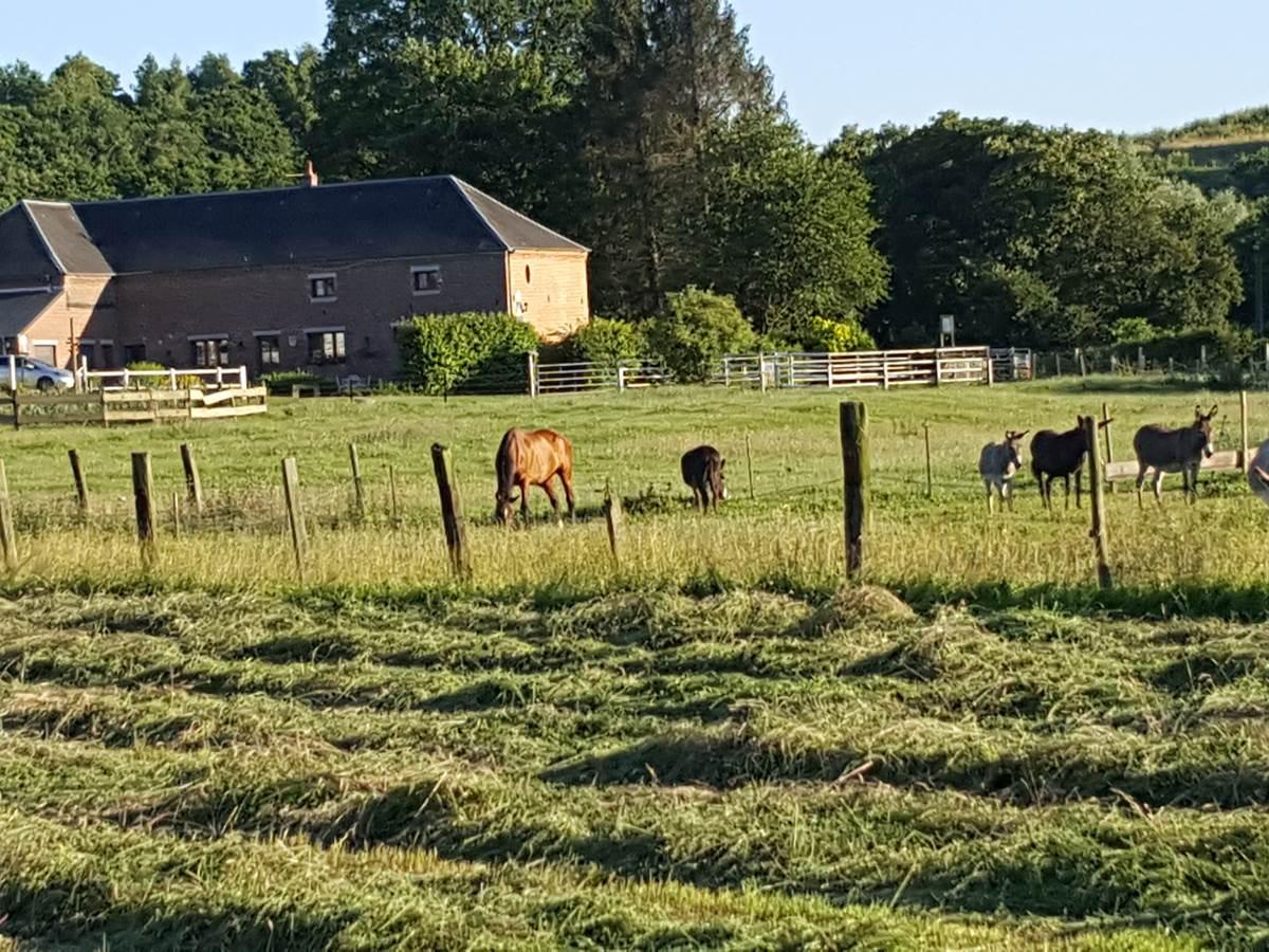 l'été aux mout'ânes