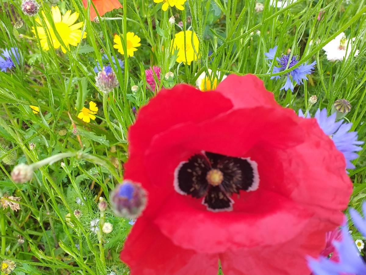 Quelques fleurs printanières du jardin