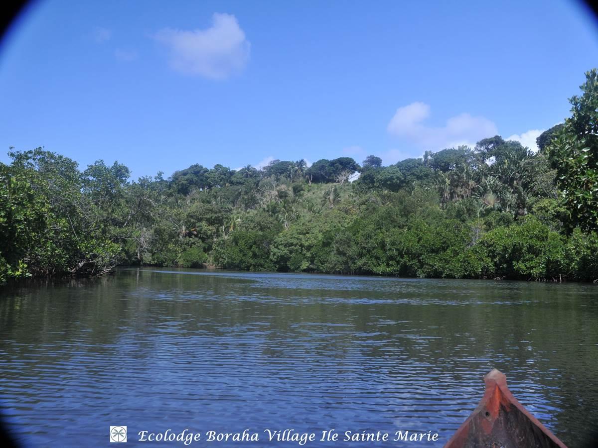 Mangrove Boraha Village Ile Ste Marie Madagascar 05