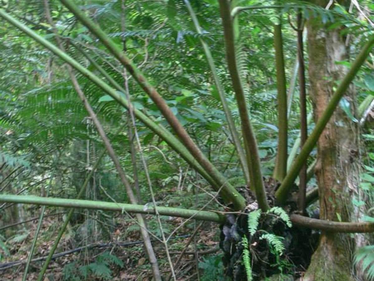 La forêt du Mont Nou