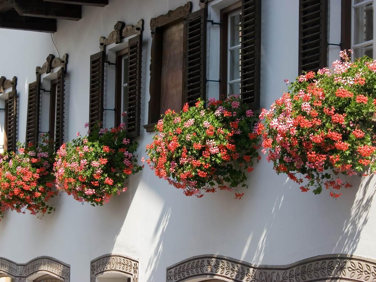 Réveil en couleur: Fenêtres ouvertes sur la vallée et géraniums en fleurs