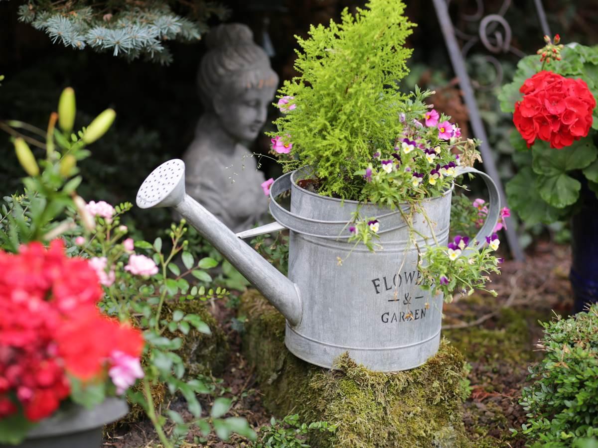 Le Jardin - La Rose Trémière