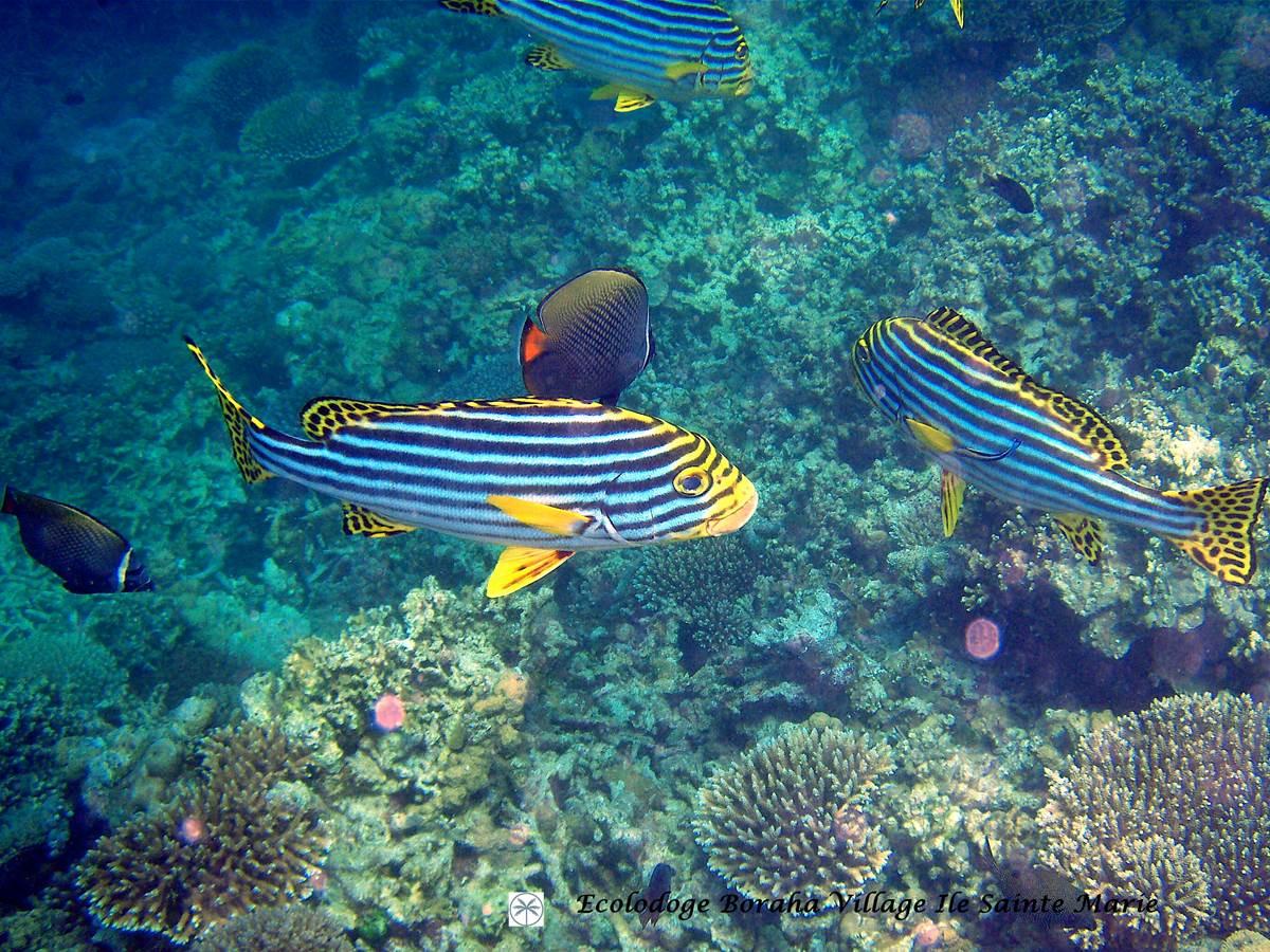 Faune Marine Boraha VIllage Ile Ste Marie Madagascar 10
