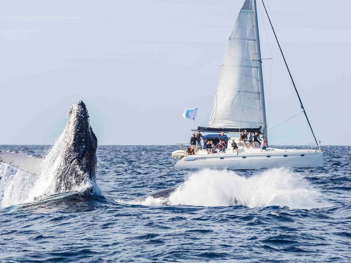 selection baleines 2