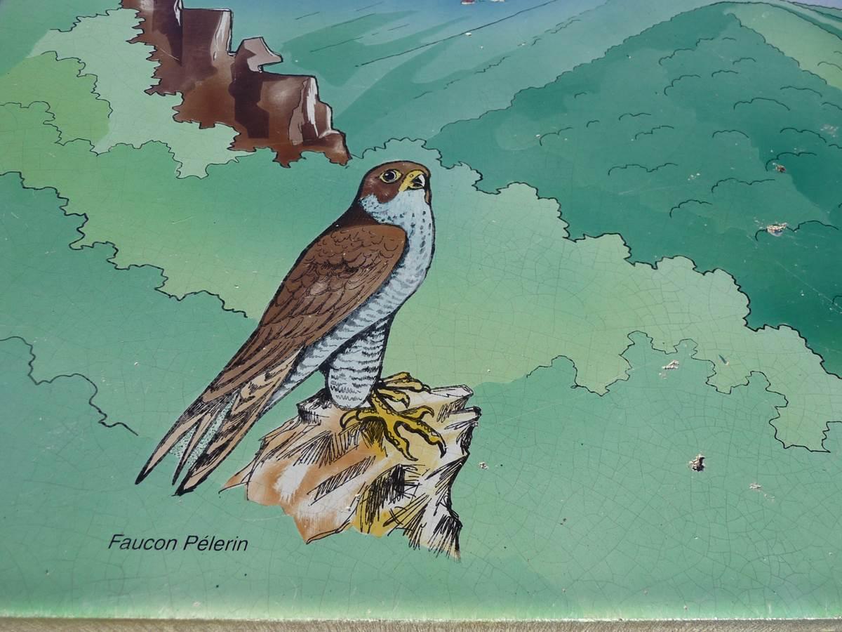 Le faucon pèlerin oiseau protégé