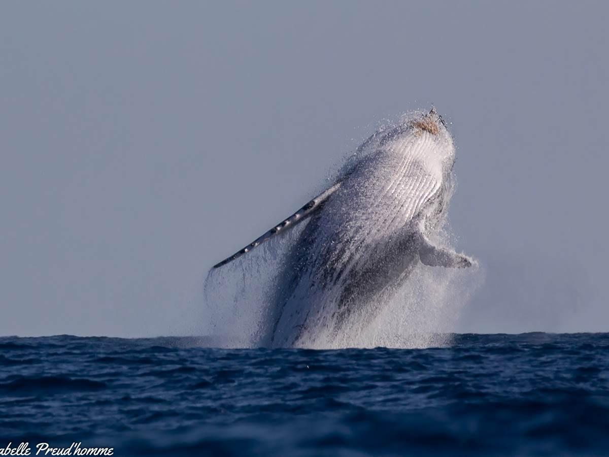 Saut baleines 7