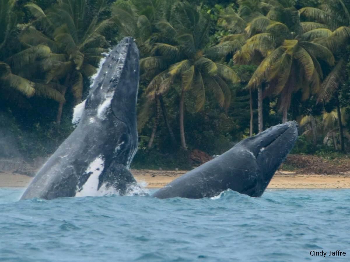 Baleine Boraha Village Ile Ste Marie Madagascar 24