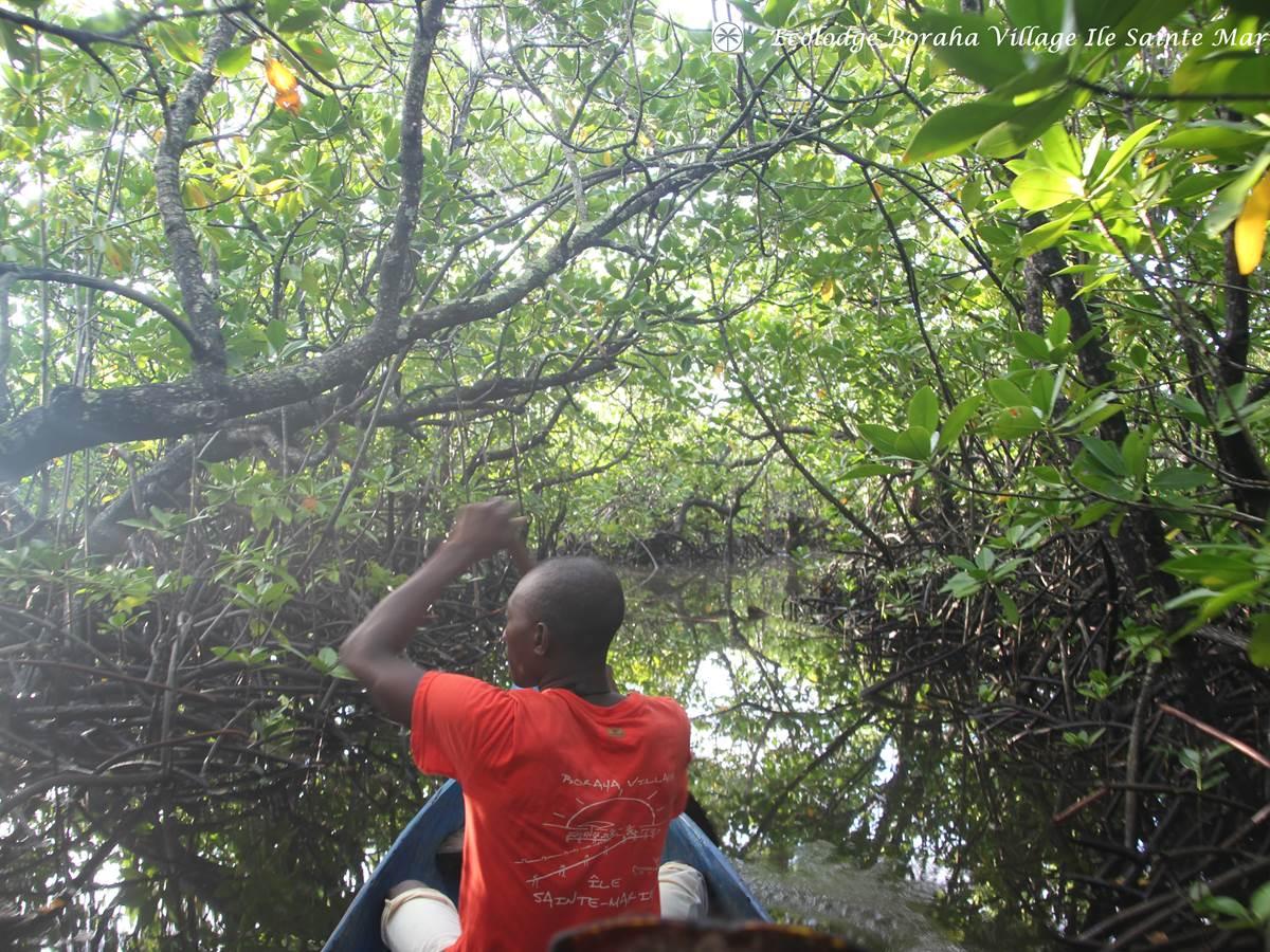Mangrove Boraha Village Ile Ste Marie Madagascar 12