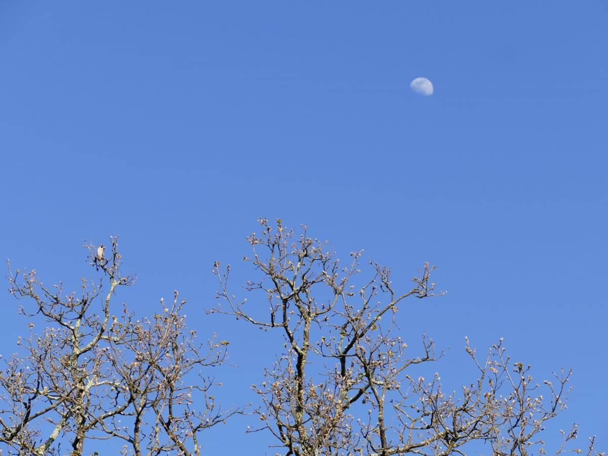 Lune et Gros Bec