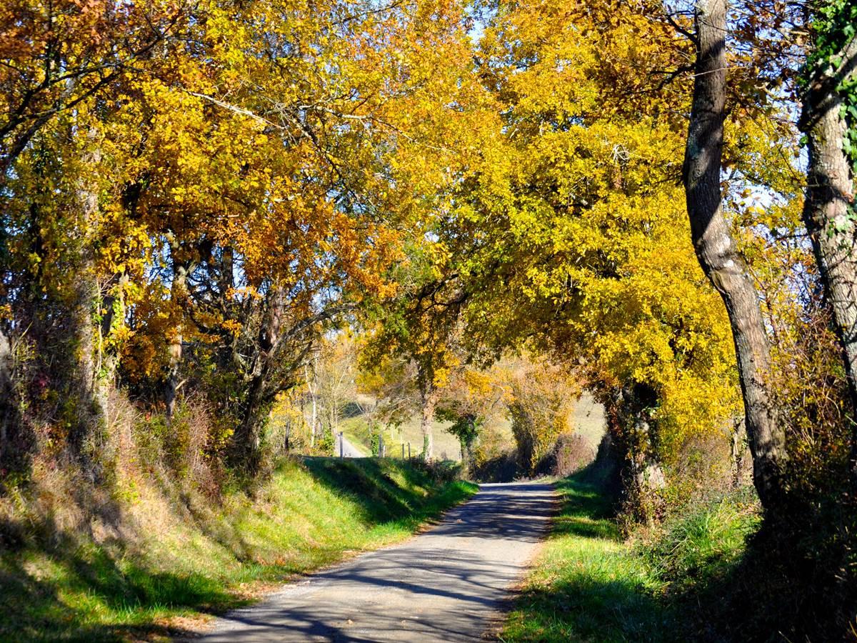 le chemin menant à la Kravezac