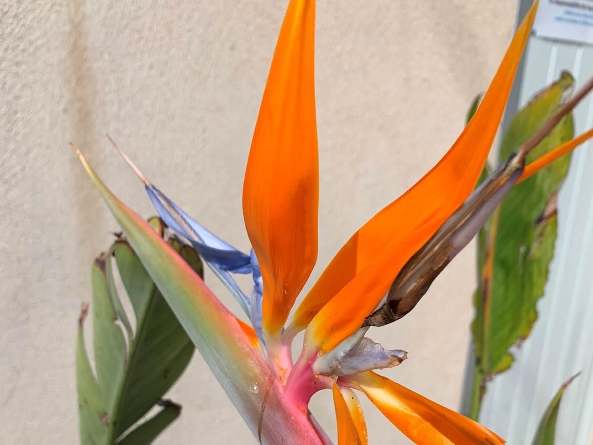 fleurs exotiques au bord de la piscine