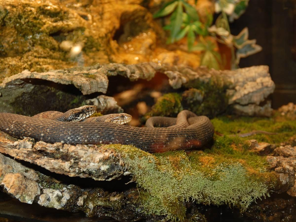 Alligator Park et sa collection de Serpents au Reptile House