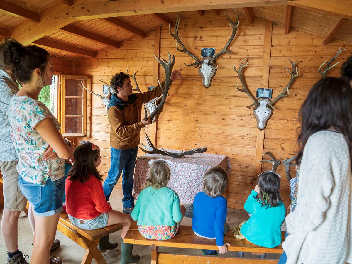 Cabane aux bois de cerfs