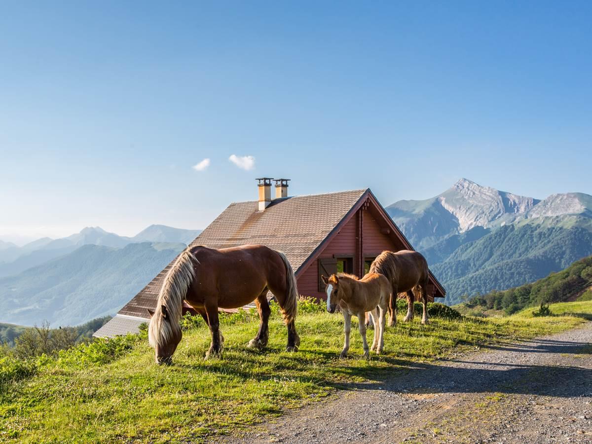 en été, les chevaux se promènent en liberté près du chalet Ossau