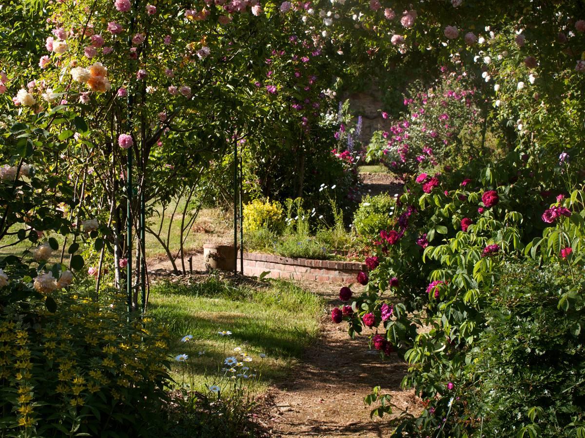 Les rosiers au mois de juin