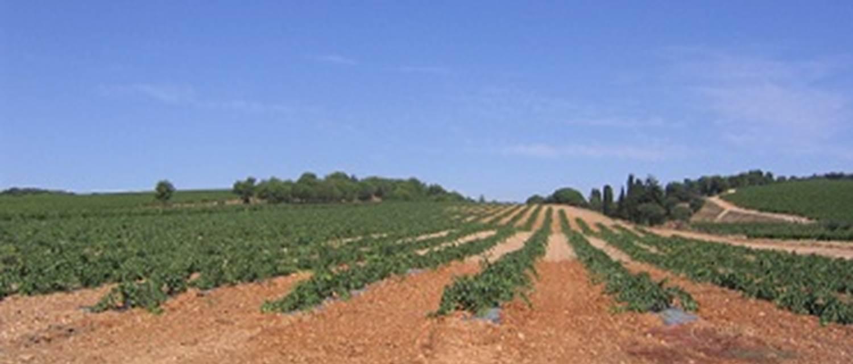 vignoble-cassagne-pinede