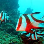 randonnée-cocoteraie-bateau-snorkeling-poisson-les villas de Sainte Marie-Madagascar